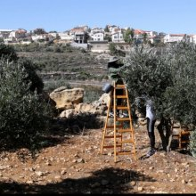 UN - UN trade report highlights impact of loss of land and resources to Palestinian economy